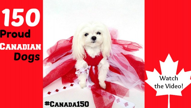150 Adorable Canadian Dogs to Wish you a Happy Canada Day
