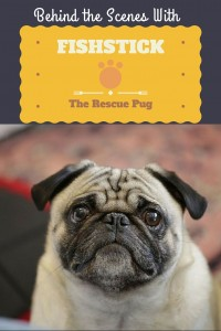 Behind the scenes with Fishstick the rescue pug