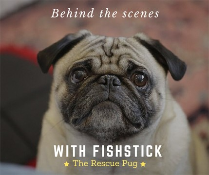 Fishstick the Celebrity Pug