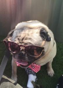 Fishstick sunglasses