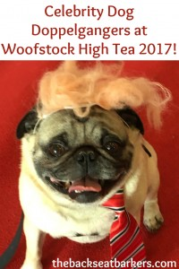 BSBWe caught up with these adorable celebrity dog doppelgangers at the woofstock high tea check out our photo gallery
