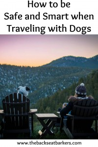 How to be safe and smart when traveling with dogs