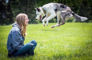 Loki jumping with Sara