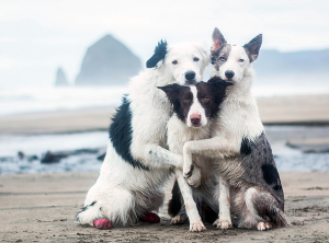 The Super Collies group hugs photo