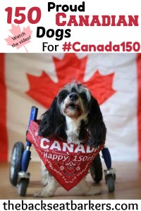 150 proud canadian dogs for canada 150