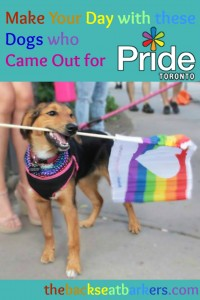 BSB make your day with these adorable dogs who came out for pride TO