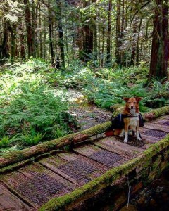 The adorable hiking dog Kiah. Photo courtesy of @outhousesandbridges