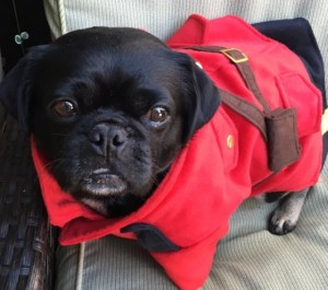 Kilo the Safety Police is dressed as a Canadian Mountie.