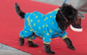 Puppy Onsie at ruff stitched fashion show
