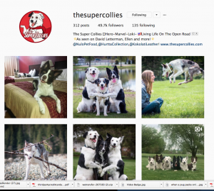 The Super Collies Instagram