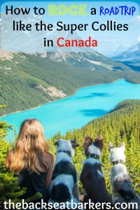 Find out How to rock a roadtrip like the super collies in canada